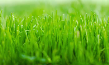 Lawn Service in Chicago IL Lawn Care in Chicago IL Lawn Mowing in Chicago IL Lawn Professionals in Chicago IL