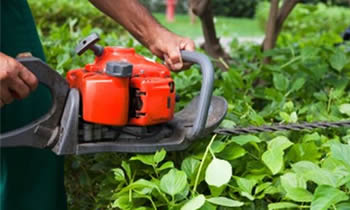Shrub Removal in Chicago IL Shrub Removal Services in Chicago IL Shrub Care in Chicago IL Landscaping in Chicago IL