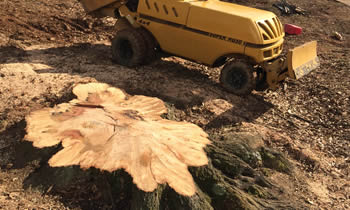 Stump Removal in Chicago IL Stump Removal Services in Chicago IL Stump Removal Professionals Chicago IL Tree Services in Chicago IL