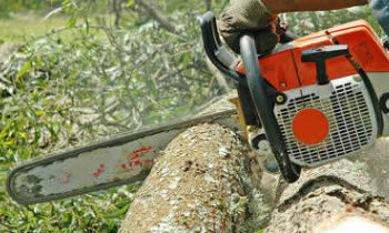Tree Removal in Chicago IL Tree Removal Quotes in Chicago IL Tree Removal Estimates in Chicago IL Tree Removal Services in Chicago IL Tree Removal Professionals in Chicago IL Tree Services in Chicago IL