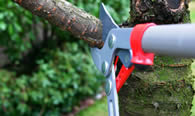 Tree Pruning Services in Chicago IL