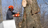 Tree Removal in Chicago IL